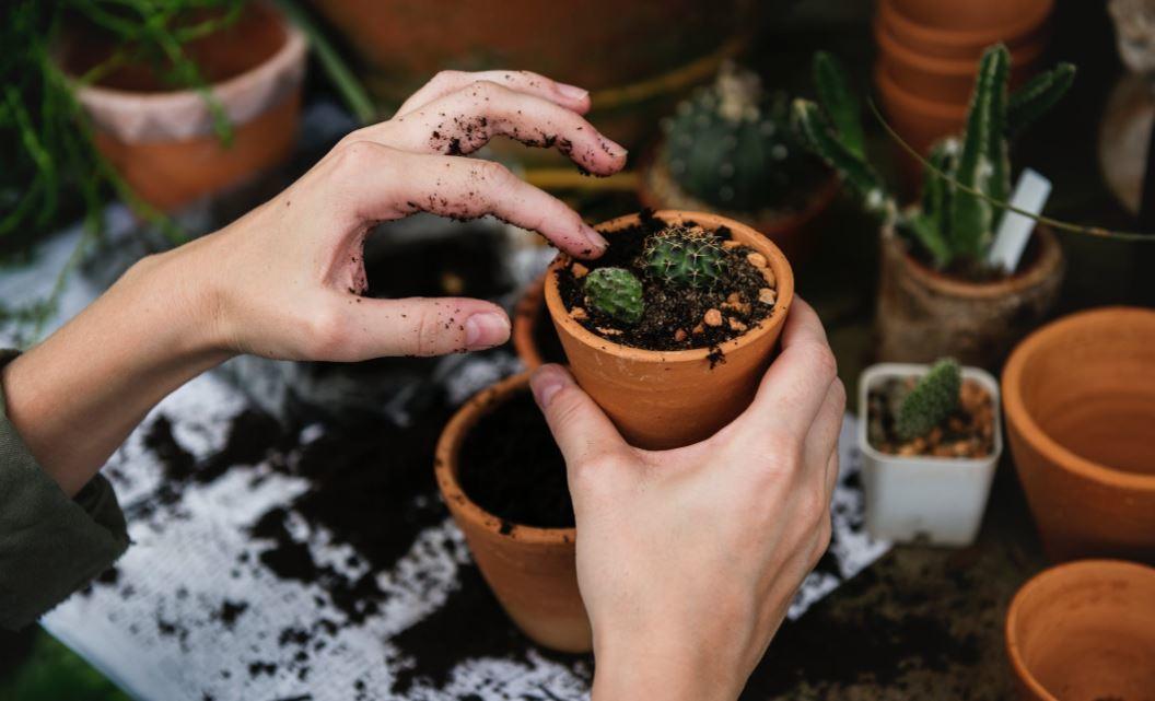 gardening-growing-plant